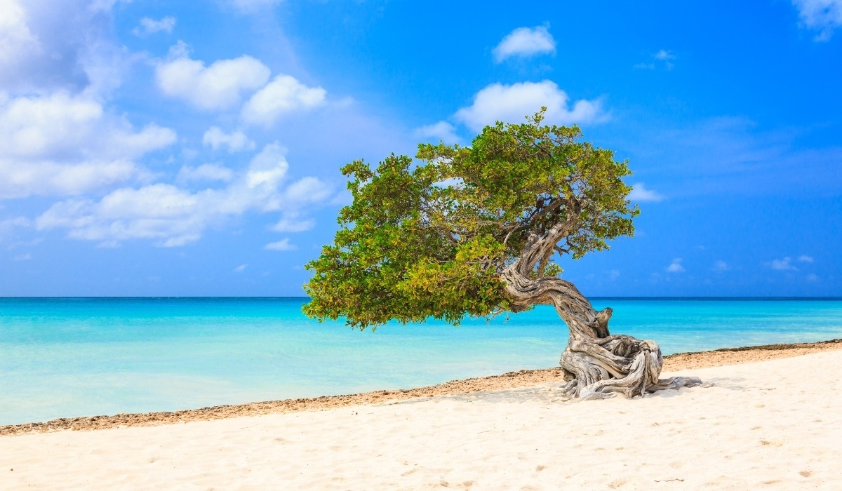 Best Things to Do in Aruba on a Cruise (2021)
