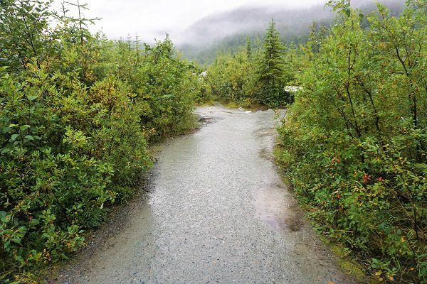 Hiking Trails at Mendenhall Glacier Visitor's Center